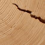 Holz Stamm mit Riss